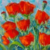 New Mexico Poppies