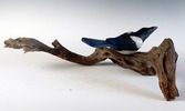 SOLD  Magpie